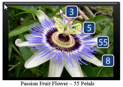 golden spirals fibonacci numbers so spectacular in nature
